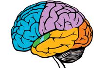 پست جامع درمان بیماریهای مغز و اعصاب